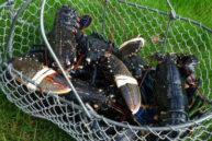 Les crustacés servis dans notre restaurant proche de barfleur viennent de Fermanville
