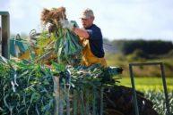 Les légumes BIO de notre restaurant du Cotentin proviennent du Val de Saire